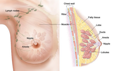 The Female Chest: How To Encourage The Uplift